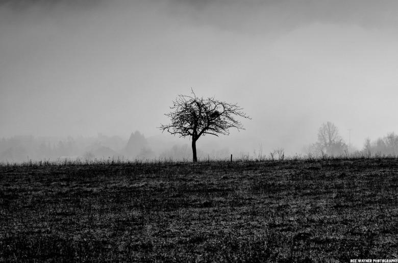 Barren tree in field